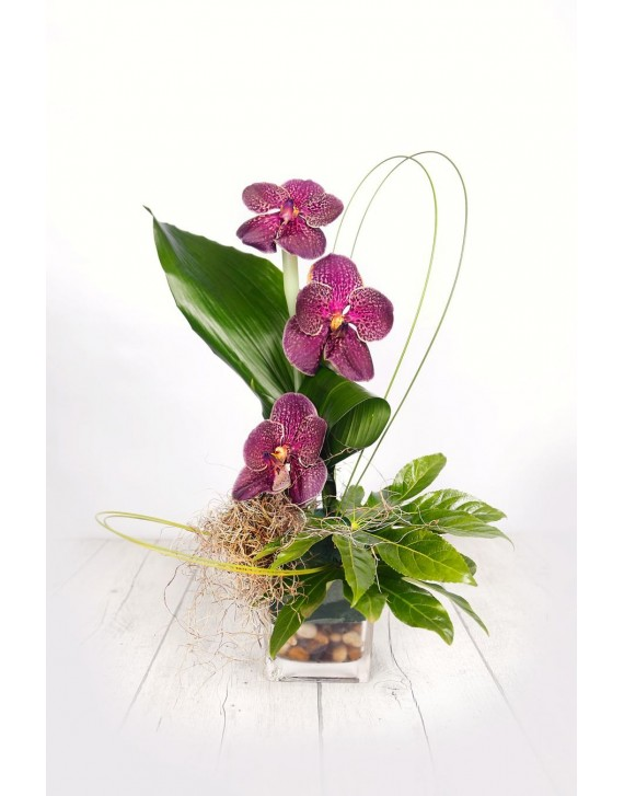 (C110) Arrangement three orchids in a crystal vase
