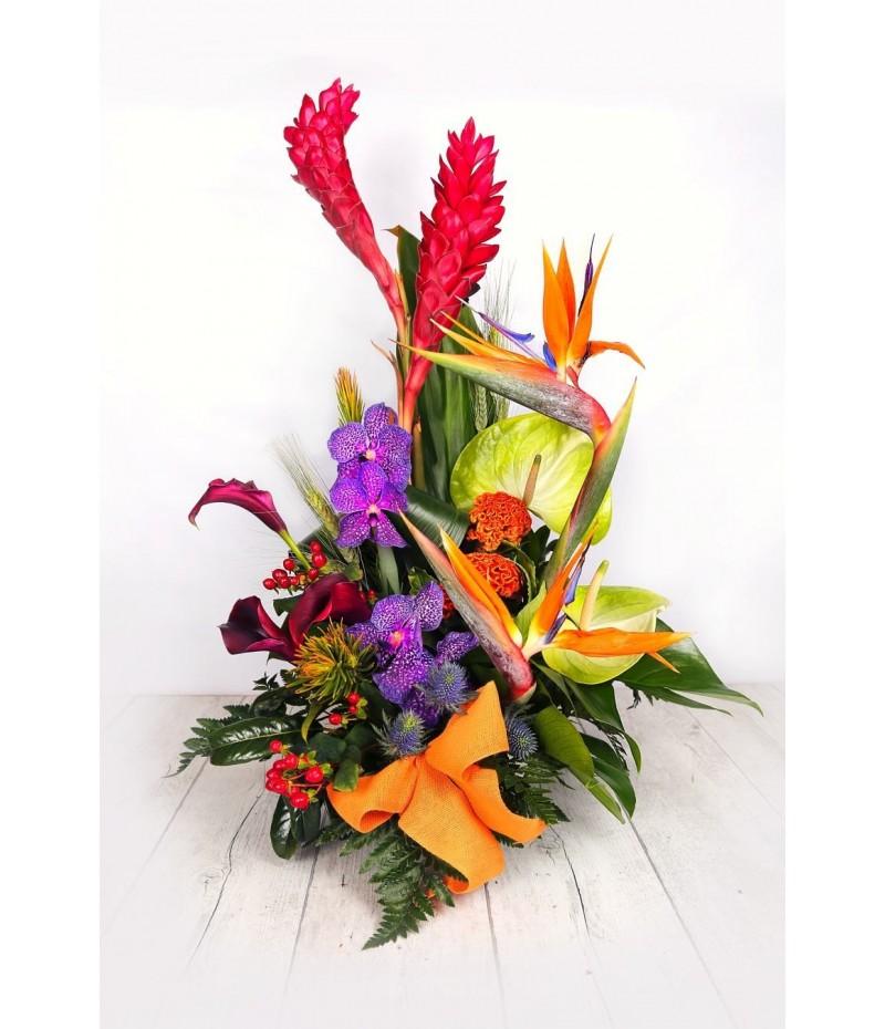 (C116) Centro tropical orquideas