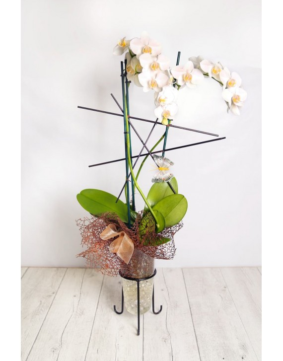 (OR103) Orchids plant crystal