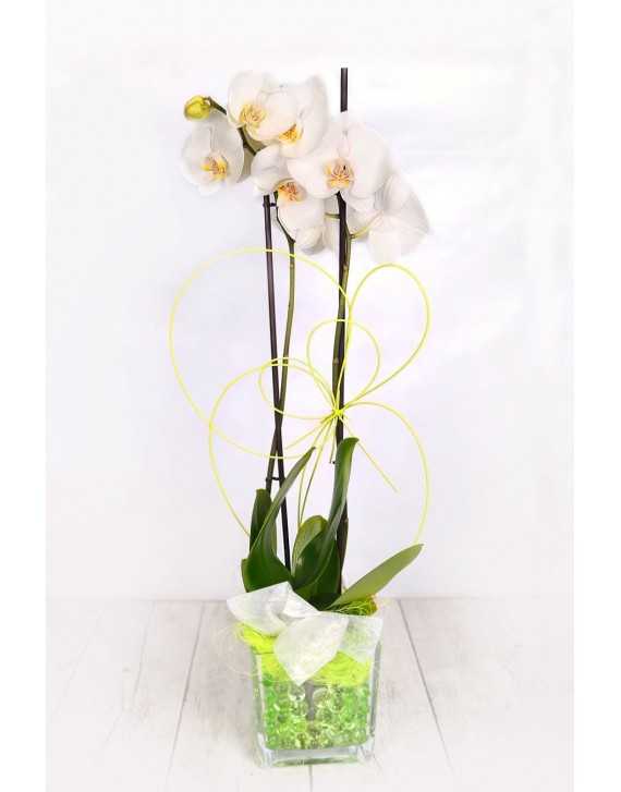 (OR104) White orchids in glass vase