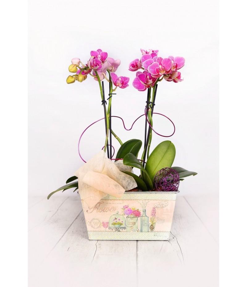 (OR107) Dos orquideas pequeñas para regalo