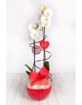 (OR109) White orchid in glass vase with a heart