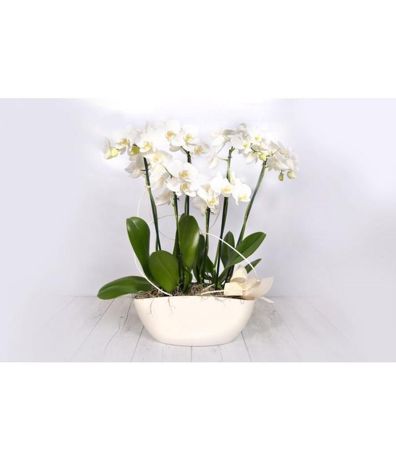 (OR110) Centro orquideas blancas