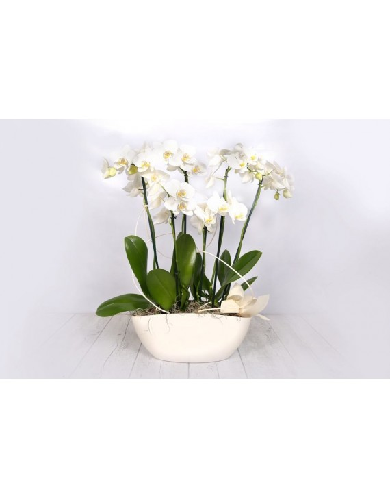 (OR110) Display of white orchids