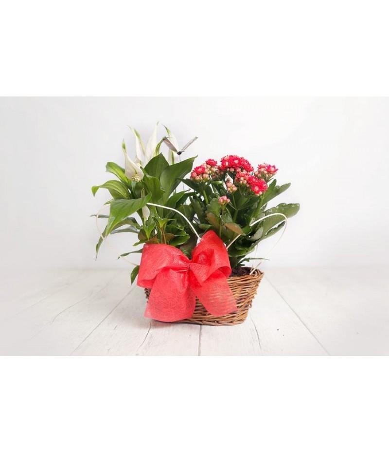 (PL104) Cesta pequeña para regalo