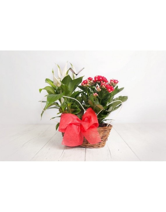 (PL104) Small basket as a gift