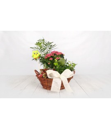 (PL105) Medium basket as a gift