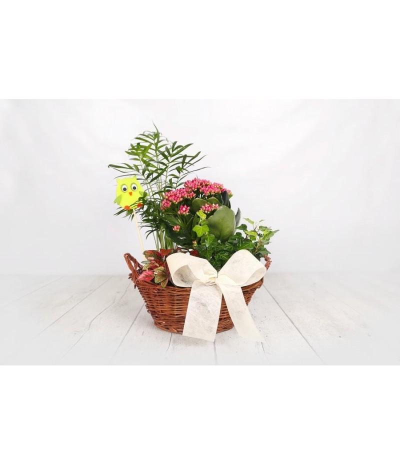 (PL105) Cesta para regalo