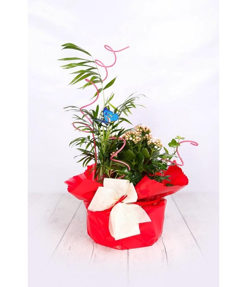 (PL106) Centro plantas sencillo