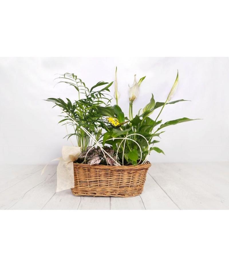 (PL107) Centro plantas ovalado