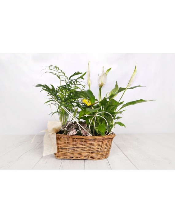 (PL107) Small plants display in oval basket