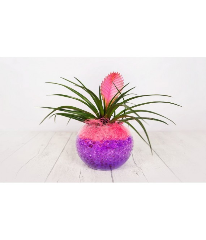 (PL110) Planta tyllandsia pequeña cristal