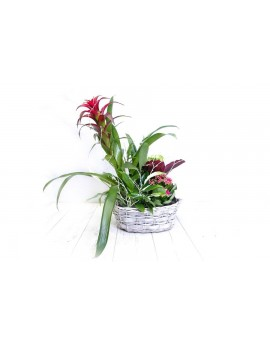 (PL111) Plant basket medium