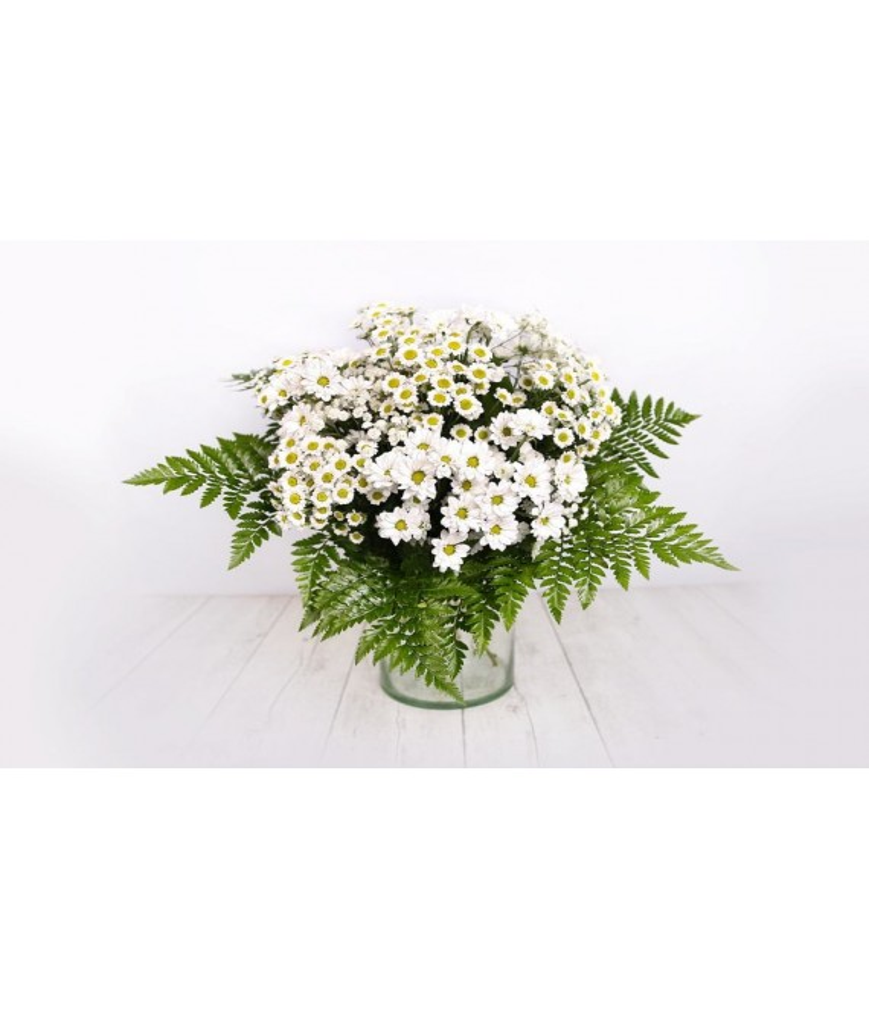 (R116) Bouquet of white marguerites