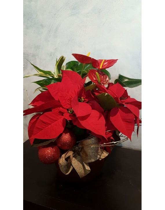 (CA108) Round plant arrangement for Christmas