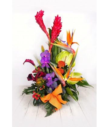 Arrangement  tropical orchids