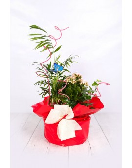 Arrangement plant simple
