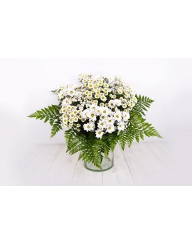 Bouquet of white marguerites