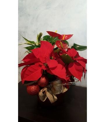 Round plant arrangement for Christmas