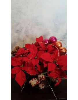 Poinsettia display with Christmas decorations